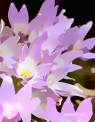 Doon art purple flower blur